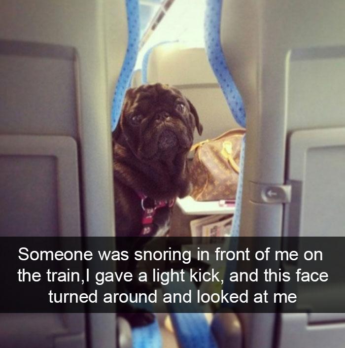 Funny Animal Snapchat 1