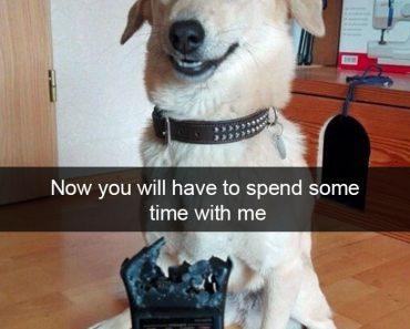Funny Animal Snapchat 14