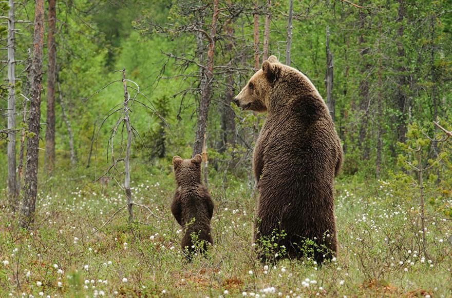 Animal Parenting Moment 4